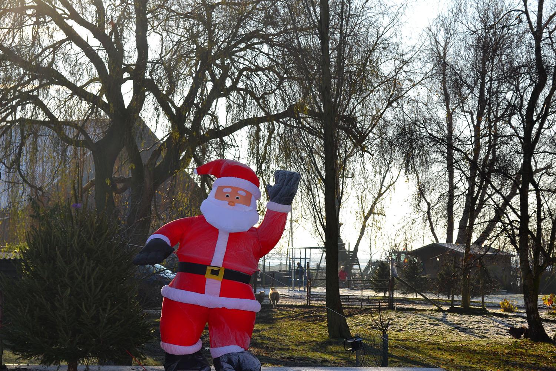 Nordmann Excellent kerstbomen Sassenheim